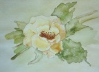 Rambling Rose  -  Watercolour
