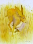 Spring Hare  -  Watercolour