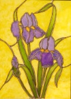 Iris  -  Watercolour