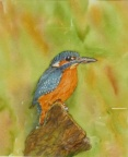 The Kingfisher. Watercolour